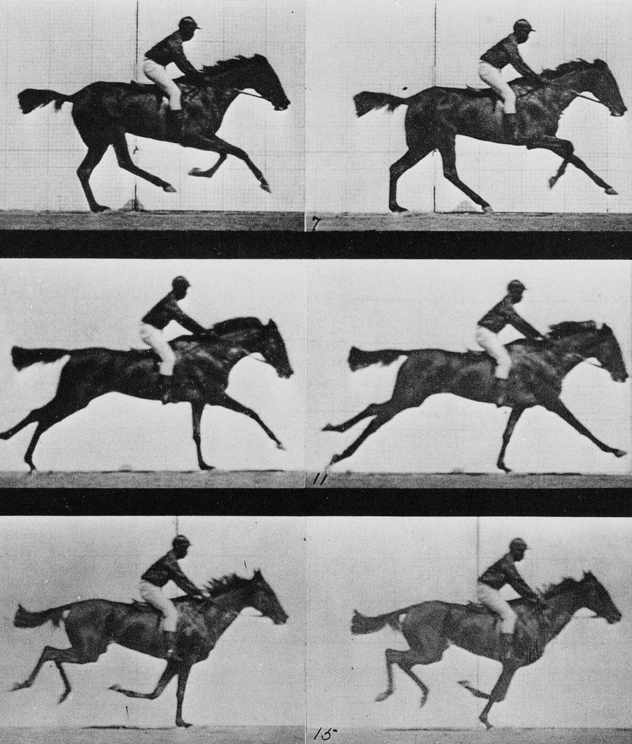 Animal locomotion – 16 frames of racehorse