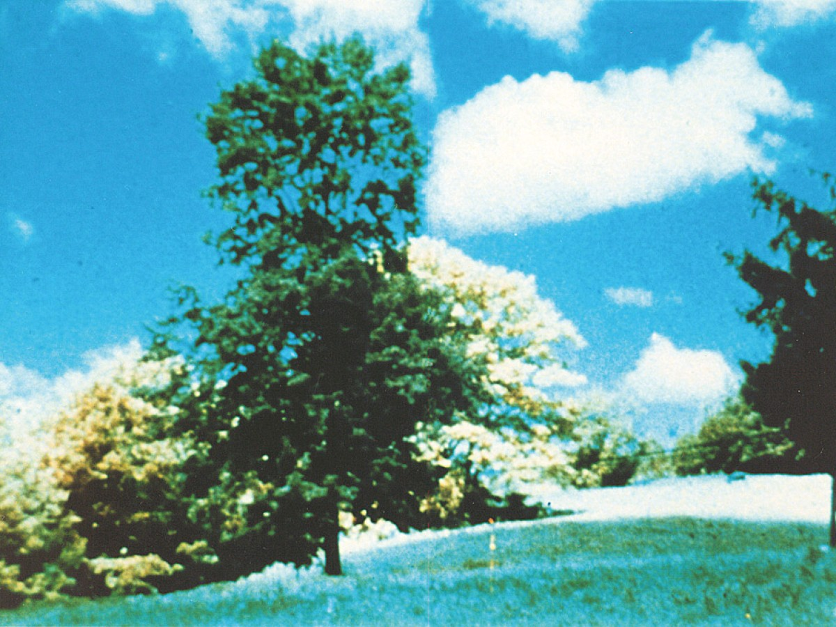 Tree again, 1978, Kurt Kren