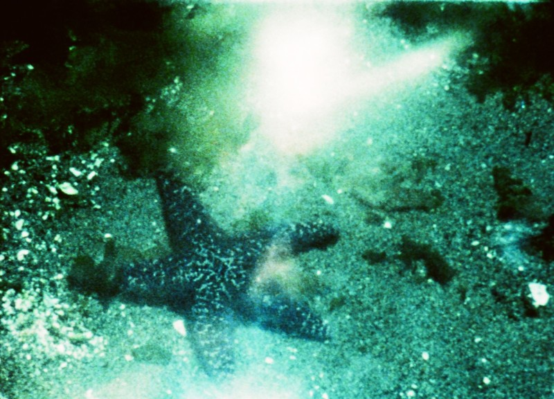 A Child's Garden and the Serious Sea, 1991, Stan                                     Brakhage KV ÖFM